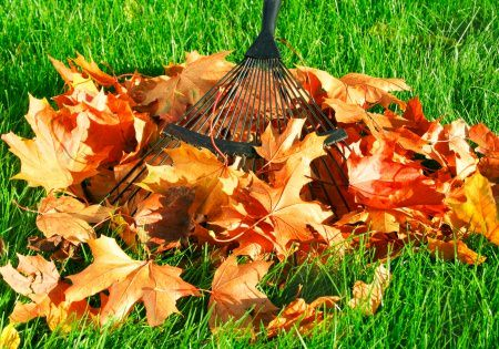 Raking Leaves-Save Your Low Back The Best Way Possible- Toronto Chiropractor