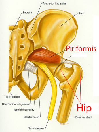 Piriformis Syndrome Can Give You Buttock Pain: Toronto Downtown Chiropractic