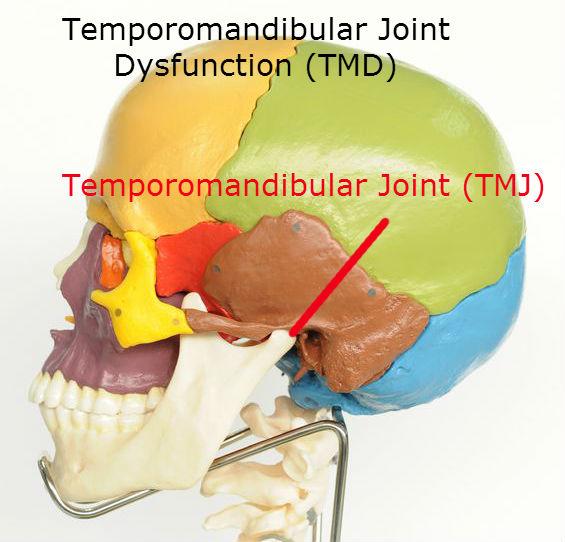 TMD Temporomandibular Joint Dysfunction: Toronto Downtown Chirorpactor Dr. Ken Nakamura
