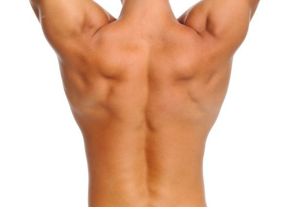 The Big 5: Low back exercises to help stabilize your lower back. Curl-up, Bird Dog and Side Plank will help your lower back pain.: Toronto Downtown Chiropractic.