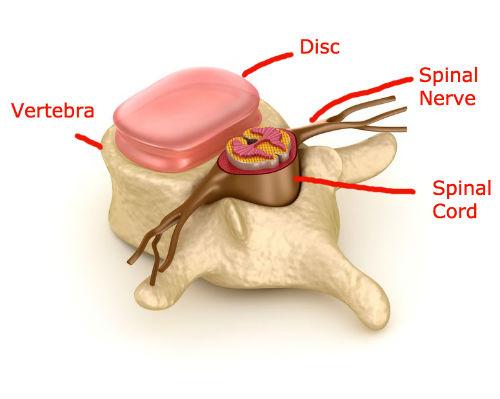 Vertebra & Spinal cord | Dr Ken Nakamura